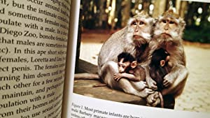 FEMALE CHOICES : Sexual Behavior of Female Primates: Small, Meredith F.