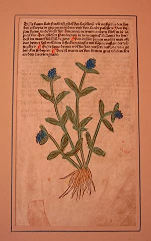 Gart der Gesundheit. Einspaltiges Inkunabelblatt mit koloriertem: Johannes de Cuba