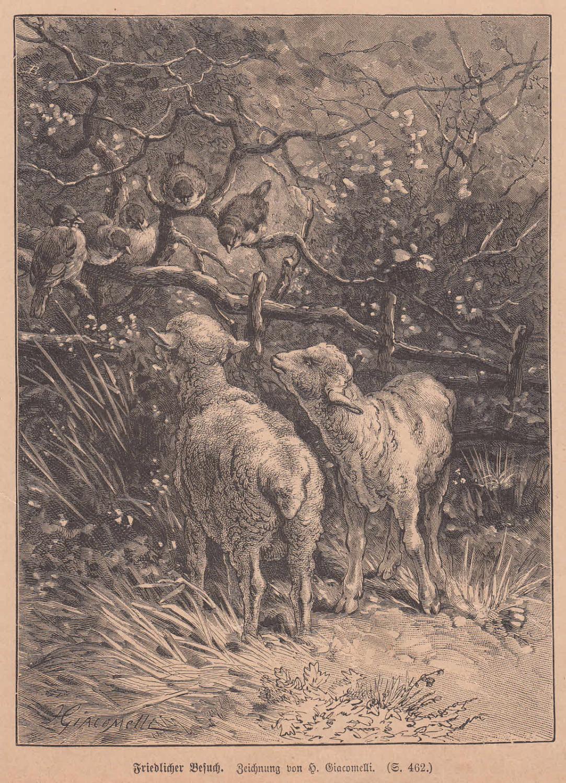 Giacomelli, H.: Friedlicher Besuch. Schafe und Vögel: Künstlergraphik,