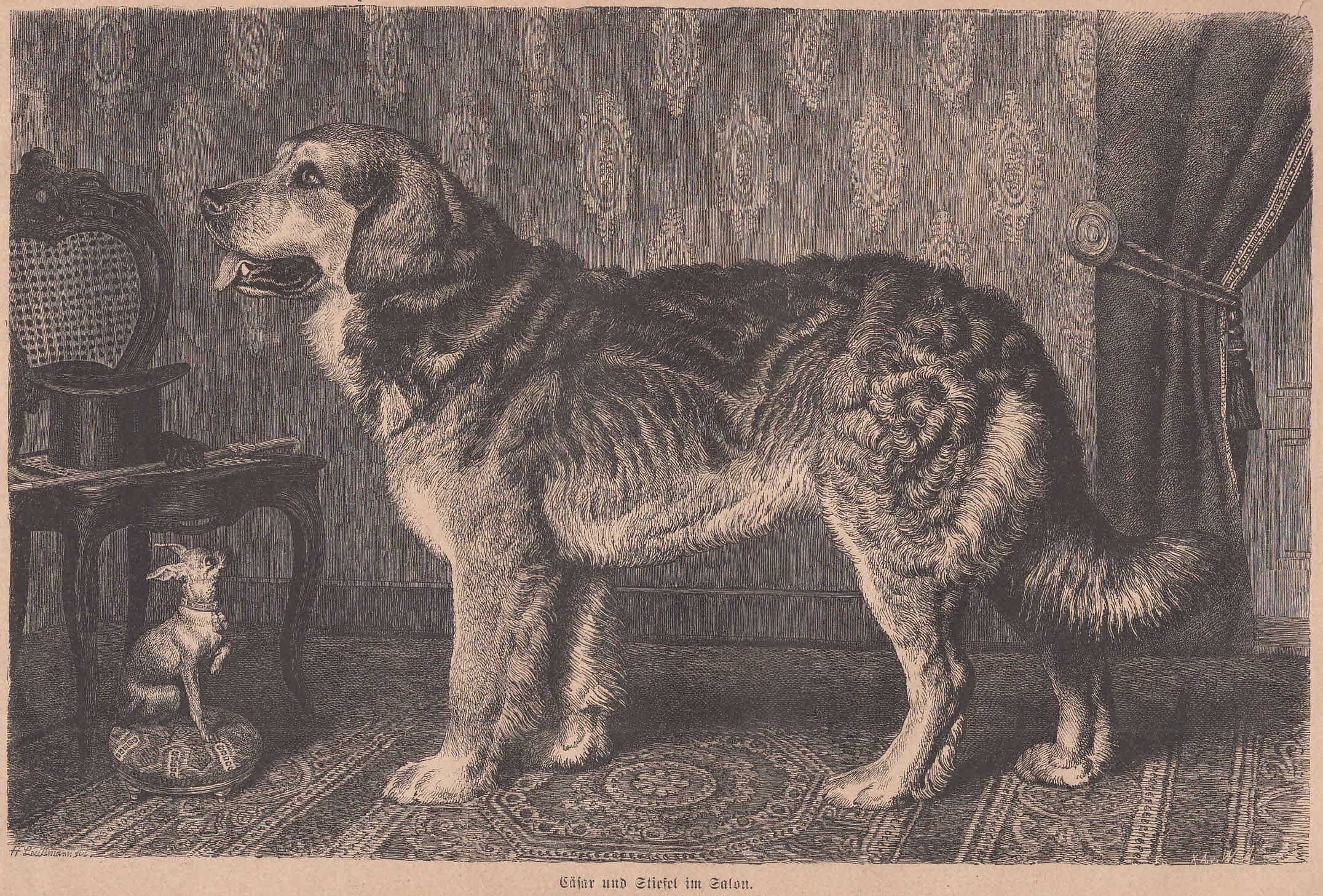 Cool Schöne Hunderassen Referenz Von Cäsar (ein Leonberger) Und Stiefel (ein Rehpinscher)
