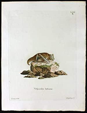 Vespertilio lasiurus – Fledermaus – Haarschwanzfledermaus: Lang, Johann Christian Daniel Schreber (...