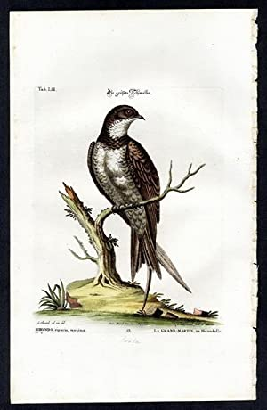 The Largest Swallow. - Die größte Schwalbe.: Seligmann, Johann Michael