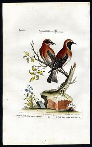 The Reddish-brown Warbler. - Die röthlichtbraune Grasmücke.: Seligmann, Johann Michael