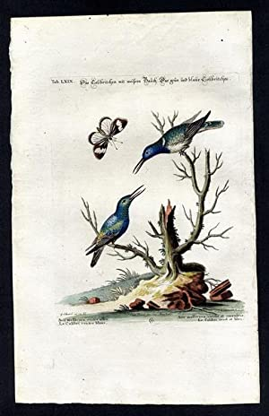 The White Bellied Hummingbird and The Green-Blue: Seligmann, Johann Michael