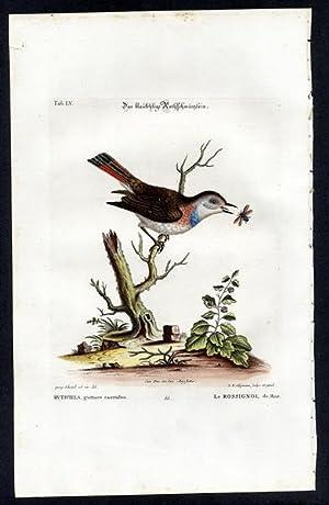 The Blue Throated Redstart. - Das blaukehlige: Seligmann, Johann Michael