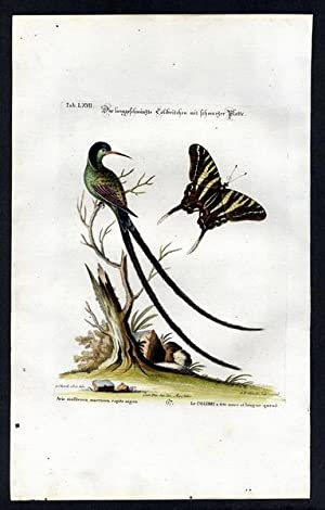 The Long Tailed Hummingbird & The Swallowtail Butterfly. - Das langgeschwäntzte Colibritchen mit ...