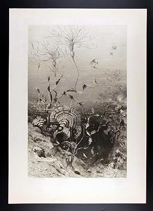 Algae / Sea-weeds   Algen / Meerespflanzen III: H. Darnaut, Anton Seder (1850-1916).