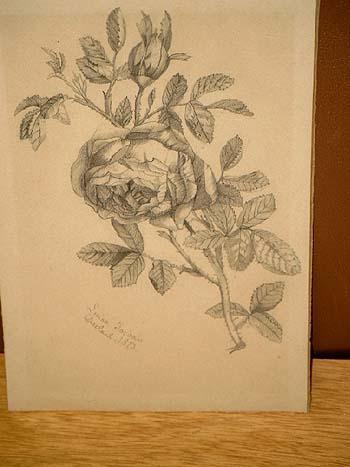 Rose Original Bleistiftzeichnung