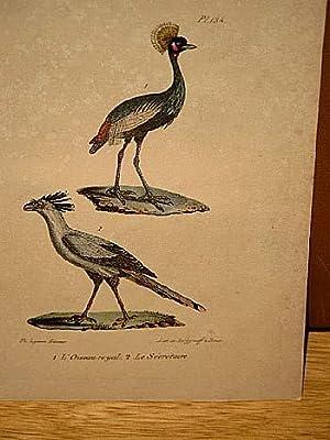 Oiseau royal + Le Secretaire. 2 altkolorierte lithographierte Vogeldarstellungen nach Burggraff auf...