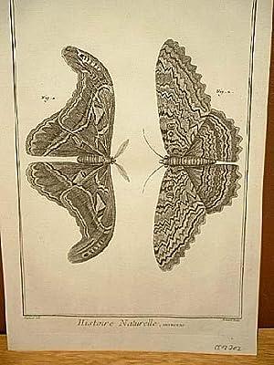 """Schmetterlinge - Insectes: Kupferstich von Benard nach Martinet aus """" Histoire Naturelle """",..."""