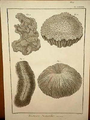 """Polypiers ( = Korallen ): Kupferstich von Benard nach Martinet aus """" Histoire Naturelle """", ..."""