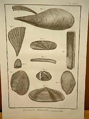 """Coquilles de Mer ( = Muscheln, Meeresmuscheln ): Kupferstich von Benard nach Martinet aus """" ..."""
