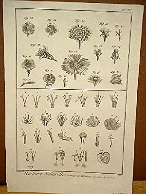 "Principes de Botanique: Systeme de Linnaeus: Kupferstich von Benard nach Goussier aus "" ..."