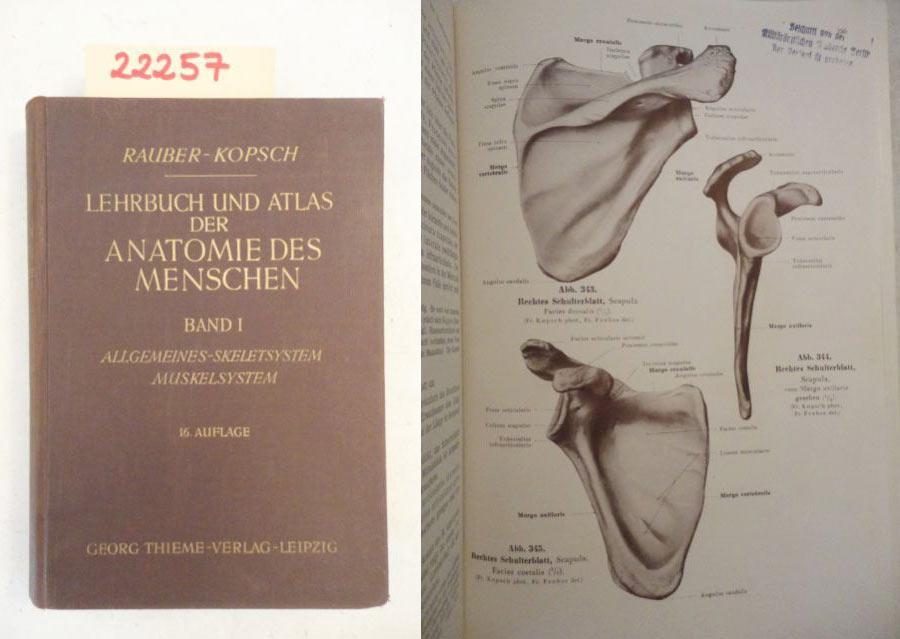 anatomie des menschen band von rauber und - ZVAB