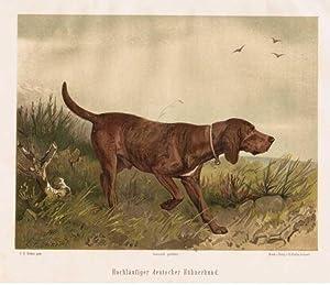 Hochläufiger deutscher Hühnerhund.: Jagdhund
