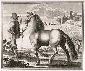 Ein Frisländer. (Friesländer / Friese / Friesenpferd).: Pferde
