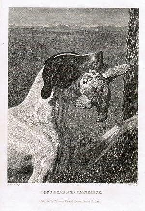 "Dog s Head and Partridge."" Jagdhund mit: Jagdhund"