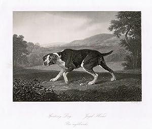 Sporting Dog. Jagd-Hund.: Jagdhund