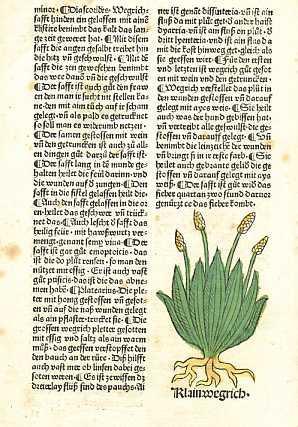 Hortus Sanitatis. Deutsche Ausgabe. Eine Seite Kleinwegrich,