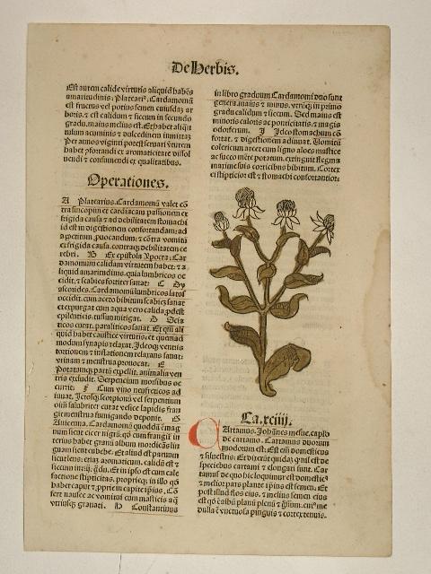 Hortus sanitatis (GW 13548, HC 8944). Cap.: Peter von Viersen):