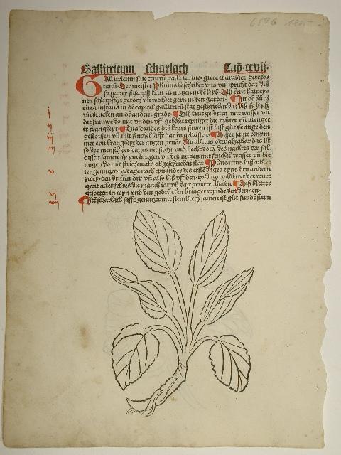 Gart der Gesundheit (GW M09766, Hain 8948).: Johann von Cube