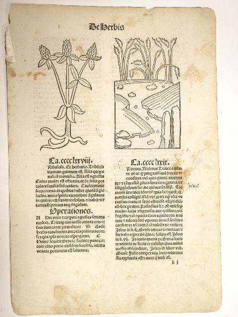 Hortus sanitatis. (GW 13548, H 8944).: Peter von Viersen):