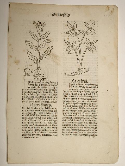 Hortus sanitatis. (GW 13548, H 8944). Cap.: Peter von Viersen):