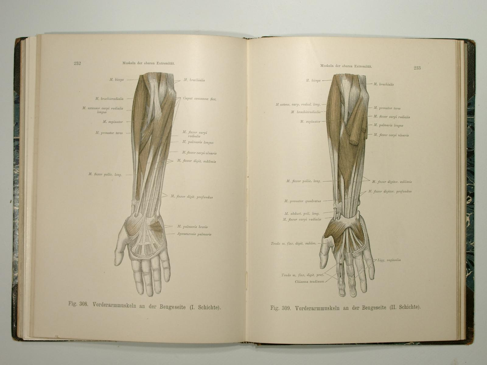 Anatomie der Sinnesorgane - ZVAB