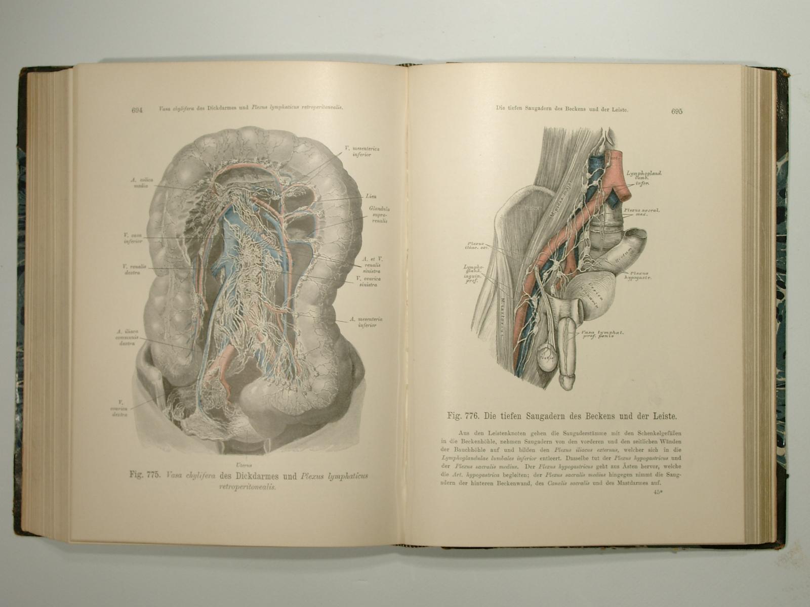 anatomie des menschen in - ZVAB
