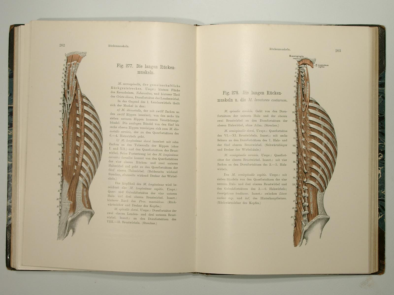 anatomie der gelenke - ZVAB