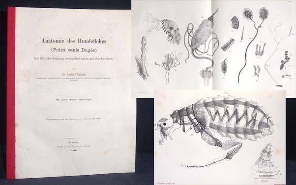 anatomie art, Erstausgabe - ZVAB
