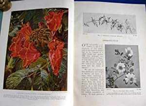 Hutchinson's Popular Botany: The Living Plant from: Knight, A. E.