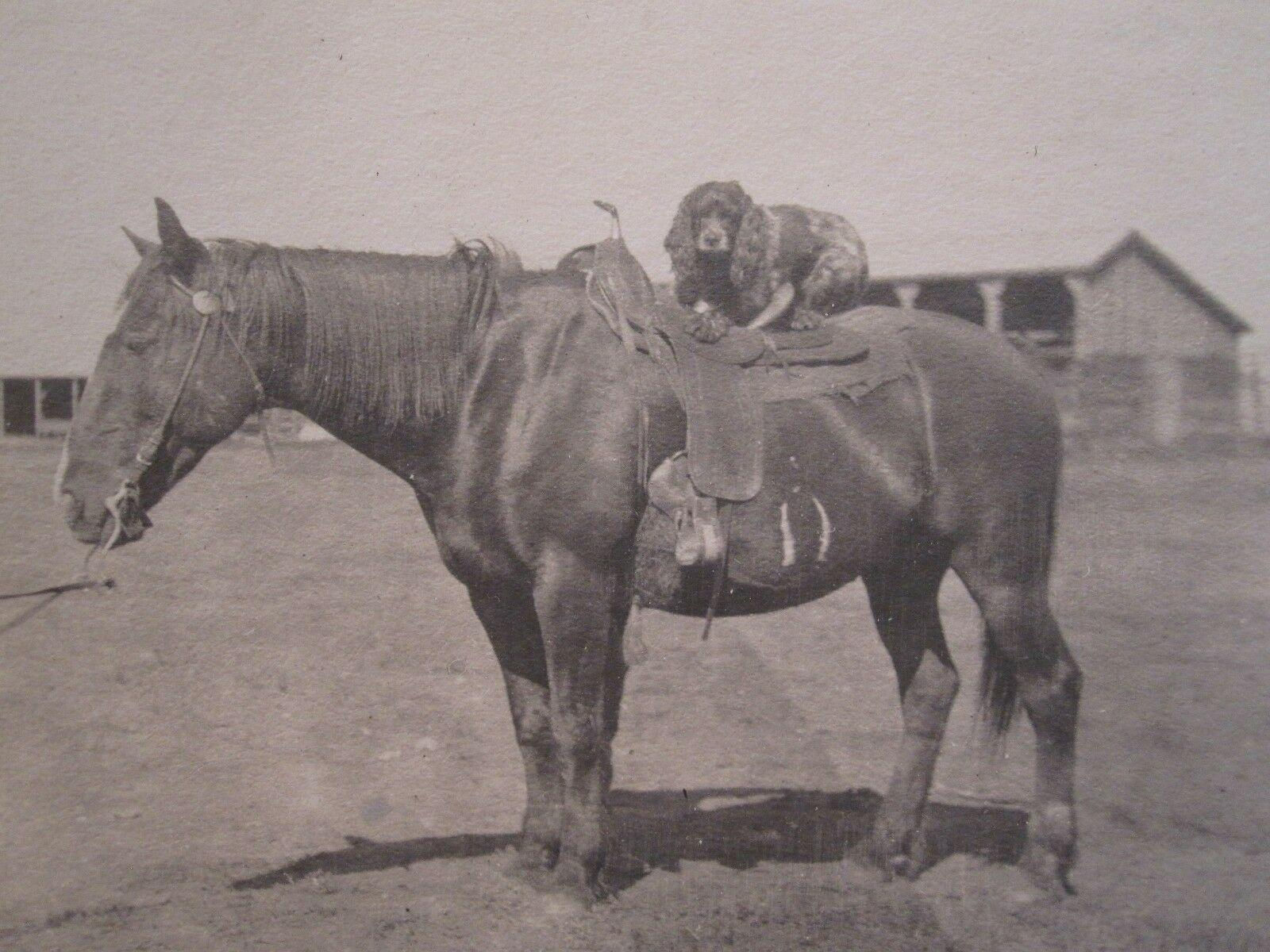 Antique Artistic Cocker Spaniel On Horse Bff Animal Love Saddle Giddy Up Photo 1950 Signed By Author S Photograph 21 East Gallery