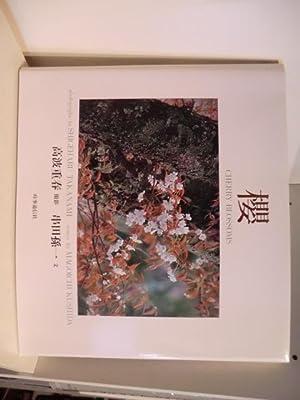 Cherry Blossoms (englisch - japanisch): Photographs by Shigeharu