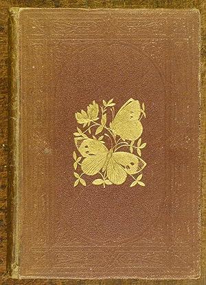 A History of British Butterflies: Morris, Rev. F.O.