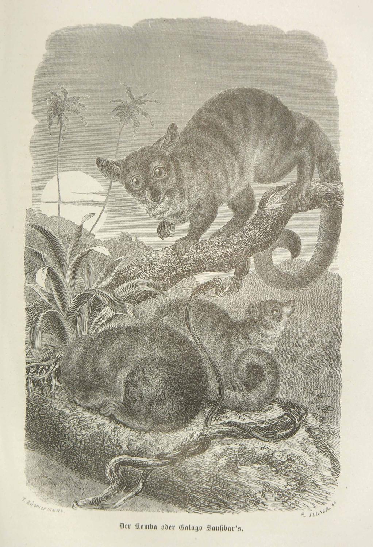 Reisen in Ost-Afrika in den Jahren 1859 bis 1861. Bearbeitet von Otto Kersten. Mit einem Vorworte ...