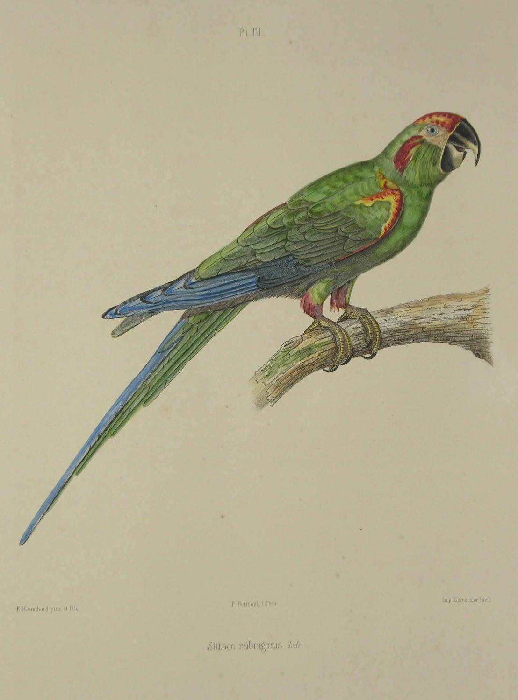 foto de viaLibri ~ Rare Books from 1857 Page 26