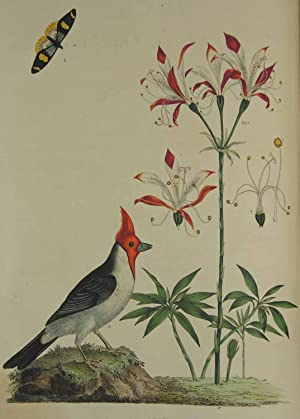 Cimelia Physica. Figures of rare and curious Quadrupeds, Birds, etc. Together with several of the ...