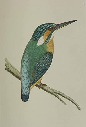 A History of British Birds.: MORRIS, F.O.