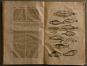 Historiae naturalis de piscibus et cetis. (und): FISCHE - JONSTON,