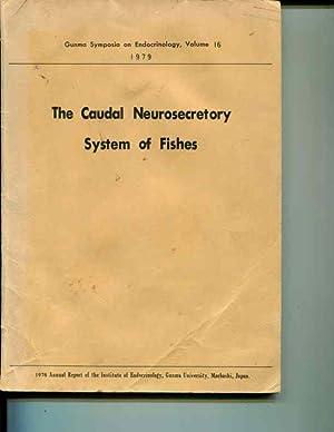 The Caudal Neurosecretory System of Fishes: Gunma