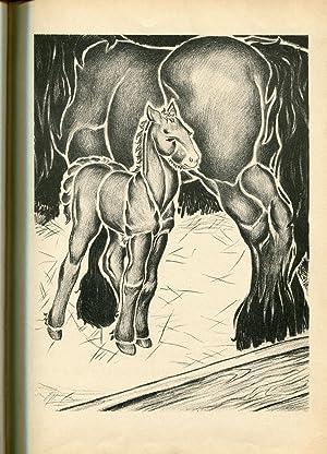 The Shire Colt: Gay, Zhenya and Gay, Jan