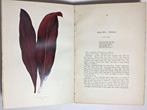 Beautiful Leaved Plants: Being a Description of: LOWE, E.J. and