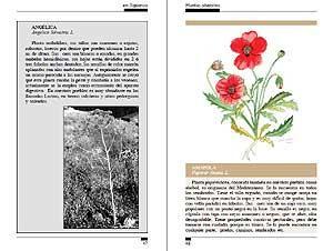 Plantas Silvestres de la comarca de Sigüenza: Eusebio Gonzalo Hernando