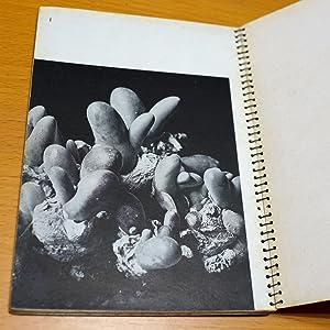 Mesemu Zoku - Cho-genjitsushugi shashin shu (Genus Mesemb: 20 Photographies Surrealistes): Yoshio ...