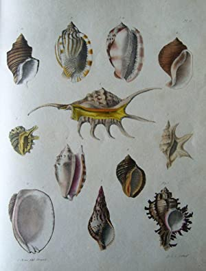 """An Illustrated Introduction of Lamarck's Conchology; contained in his """"Histoire Naturelle..."""