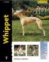 Whippet (Excellence): Juliette Cunliffe