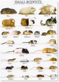 Pequeños roedores I - Small rodents I