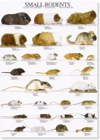 Pequeños roedores II - Small rodents II