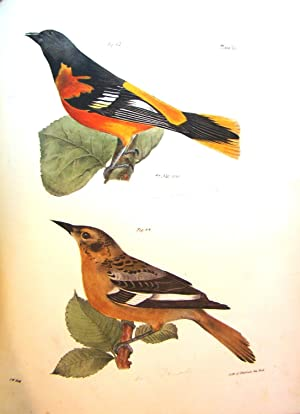 NATURAL HISTORY OF NEW YORK. ZOOLOGY OF NEW YORK, OR THE NEW YORK FAUNA. PART II. BIRDS